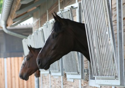 Sport stables